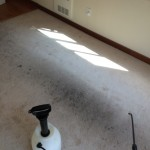 Carpet Cleaning Walnut Creek _7412