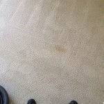 Carpet Cleaning Walnut Creek _7417