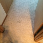 Hallway Carpet Cleaning Walnut Creek _7621