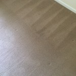 Steam Cleaning Walnut Creek _7418