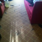 Walnut Creek-Carpet-Clean-before
