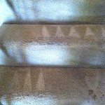 Walnut Creek-Stairs-Carpet-Cleaning