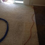 Walnut Creek-Traffic-Area-carpet-cleaners